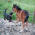 Mistys_foal_small